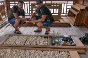 Pracovníci Zoo Liberec odhalili a zatkli gang pytláků a pašeráků želvích vajec v Indonésii